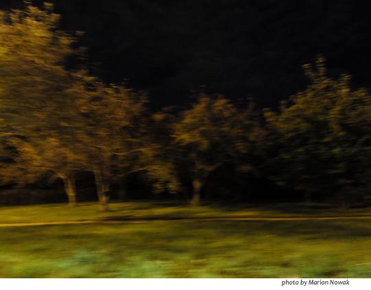 shadowtrees